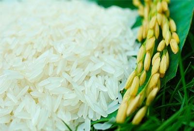 Philippines có kế hoạch nhập khẩu 250.000 tấn gạo